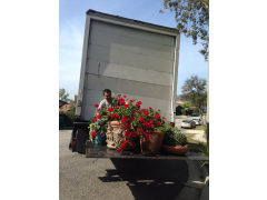 Americana Professional Movers